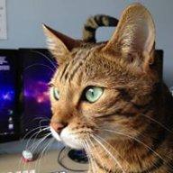Cyber_Cat